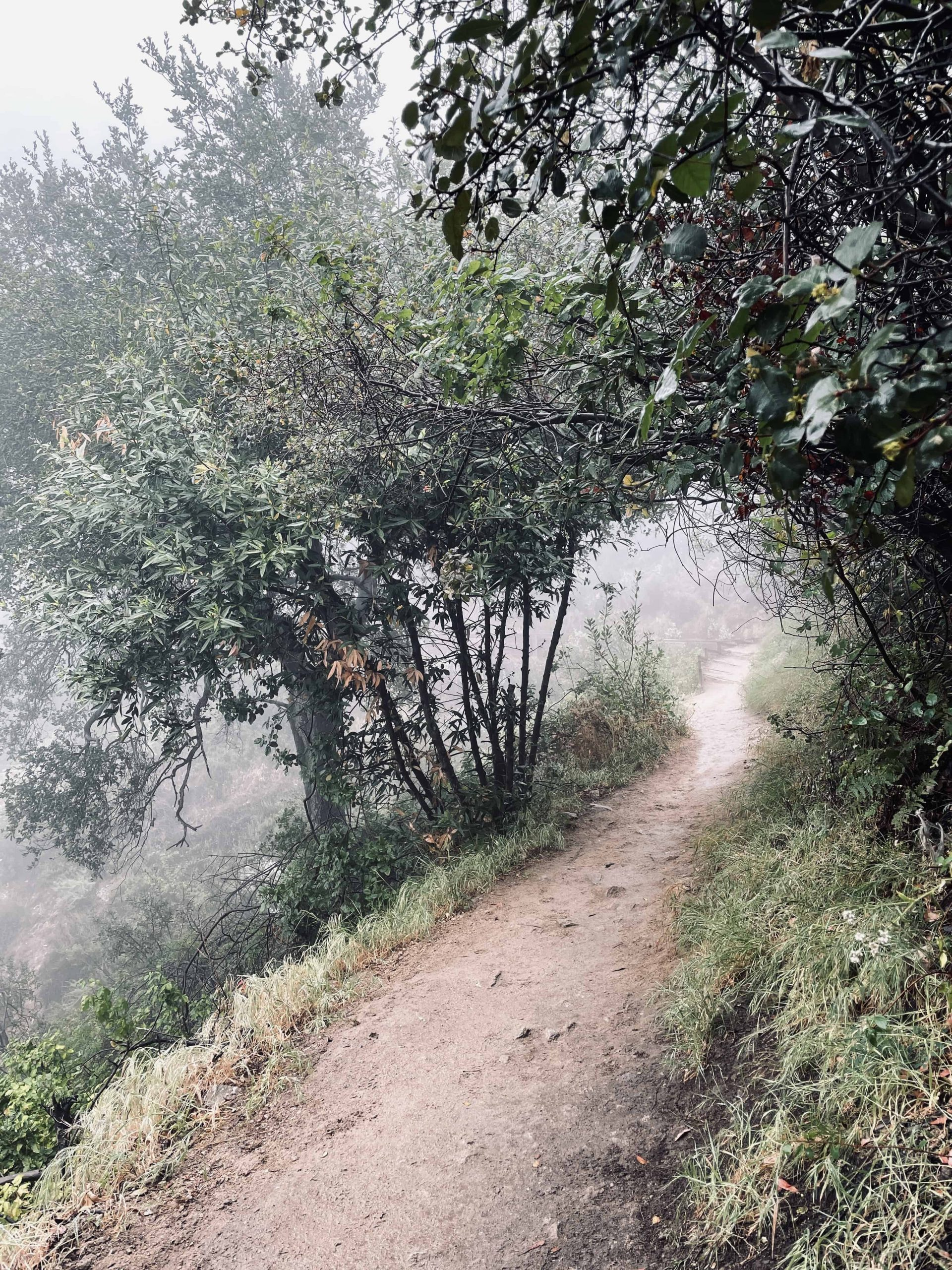 Foggy Path Free Download | Made of Lovely